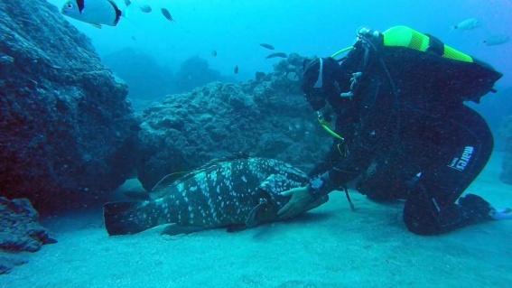 streichelfisch